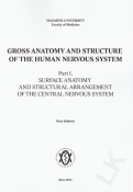Gross Anatomy and Structure of the Human Nervous System